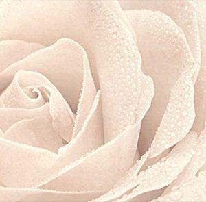 Керамическая плитка Розовый город Декор Роза 12056 3F 25х75