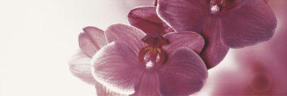 Керамическая плитка Abrila Kwiat B Декор (блестящий) 20х60