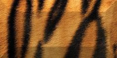 Керамическая плитка Africa Бордюр рельефный br1020D210-1 20х10