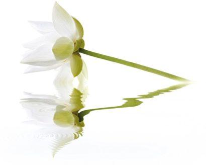 Керамическая плитка City White Lilies Панно 40x50 (2пл)