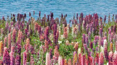 Керамическая плитка Dec Flora Декор КВС16Flora 25х45