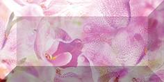 Керамическая плитка Impression Бордюр рельефный br1020D190-2 20х10