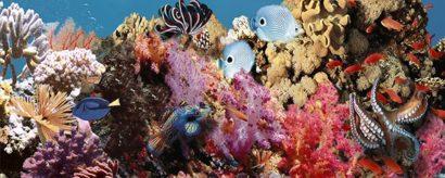 Керамическая плитка Ocean Reef 1 Декор 20x50