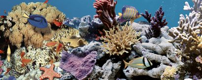 Керамическая плитка Ocean Reef 2 Декор 20x50