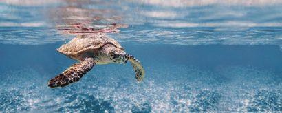Керамическая плитка Ocean Turtle Декор 20x50