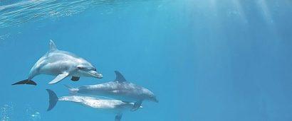 Керамическая плитка Porto Dolphins 1 centro Декор 25x60