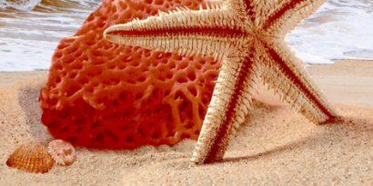 Керамическая плитка Ривьера Декор 08-10-23-252 40х20
