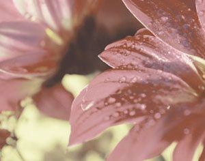 Керамическая плитка Сиерра 3С Декор Цветы тип 1 20х50