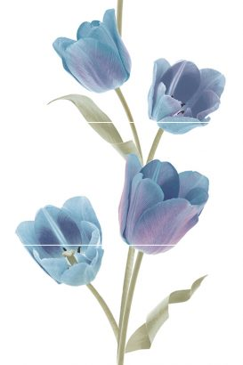 Керамическая плитка Tulips Frios Панно (из 3-х плиток) 50х75