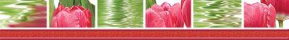 Керамическая плитка Тюльпаны Бордюр 77-05-47-160-0 50х7