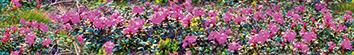 Керамическая плитка Alps B300D246 Бордюр 30×4
