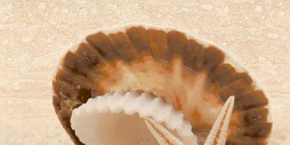 Керамическая плитка Аликанте Декор 10-00-11-121 25×50